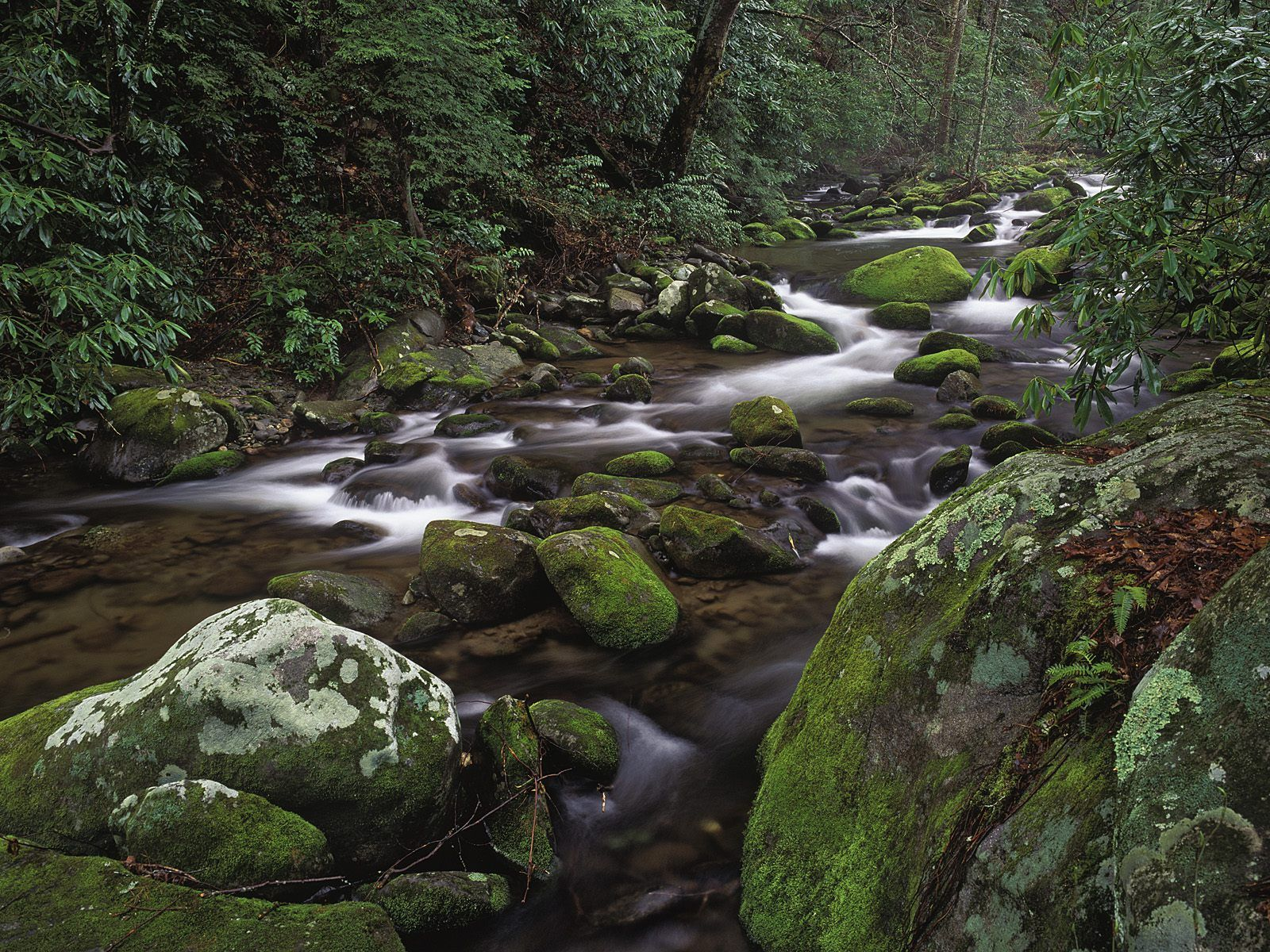 stream in the mountains - photo #33